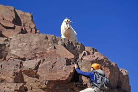 Lone rock climber in the mountains with goat, Colorado Rockies